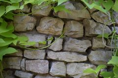 Stone texture. With leaves beautiful Stock Image