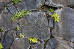 Stone Texture. Stone Tile Textured Wall. Seamless Texture Stone Wall. Seamless Background. Puerto De La Cruz, Volcanic Stone Wall. Stock Photography