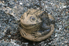 Stone toad Royalty Free Stock Photo