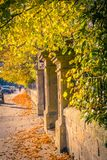 Stone traditional fence with yellow leaves. Beautiful, golden autumn scenery with trees and golden leaves in the sunshine in Scotland stock image