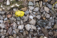 Stone Trail with Yellow Leaf Royalty Free Stock Image