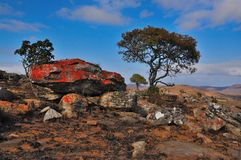 Stone and Tree. On a hiking trail in the Blyde River Canyon in South Africa i can take this photo Stock Photos