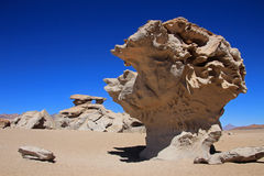 Stone tree or arbol de piedra in the desert of Bolivia Royalty Free Stock Images
