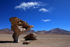 Stone tree or arbol de piedra in the desert of Bolivia Royalty Free Stock Image