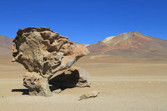 Stone Tree in Desert, Bolivia Royalty Free Stock Images