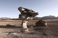 Stone Tree Royalty Free Stock Images