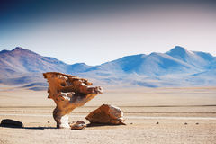 Stone tree on the plateau Altiplano, Bolivia Stock Images