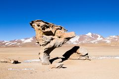 Stone Tree rock, Bolivia. Bolivian landmark. Arbol de Piedra siloli altiplano altitude america andean andes desert eduardo avaroa fauna national reserve royalty free stock photography