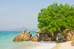 Stone and tree by the sea Stock Photography