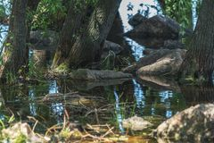 Stone, trees and grass in water. Mystical place in sunny summer royalty free stock photos