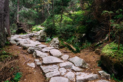 Stone trekking path in Studena dolina, Tatra Mountains, Slovakia Royalty Free Stock Images