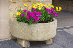 Stone trough with yellow and purple daisies. Stock Image