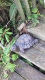 Stone turtle Royalty Free Stock Photo