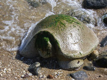 Stone Turtle at the Seashore Stock Images