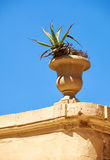 Stone vase with agave on the top of the wall in Mdina. Malta Stock Image