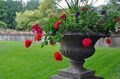 Stone vase with begonias stock images