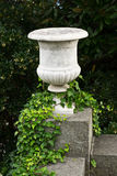 Stone vase with ivy Royalty Free Stock Photo