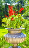 Stone vase. Of red flowers Royalty Free Stock Photos