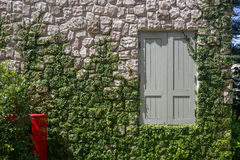 Stone veneer wall with window and plants. Brown stone veneer wall with gray wooden window and growing green plants Royalty Free Stock Image
