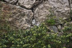 Stone vine wall blocks. Large blocks of stone amid the overgrowth of vegitationa nd vines. structures old europa farm wall land barrier marking territorial stock photo
