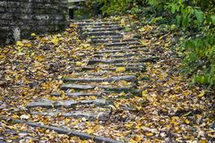 Stone stairs with autumn leaves Royalty Free Stock Image