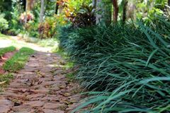Stone walk path of a garden with bushes royalty free stock photos