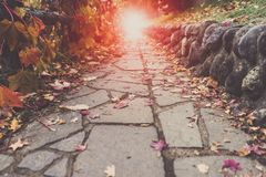 A Stone walking path, red leaves scattering on it. Leading into