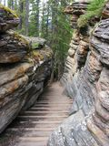 Stone Walkway. A set of stone stairs leads down a path near Athabasca Falls in Jasper National Park royalty free stock photography