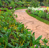 Stone walkway in flower garden Royalty Free Stock Image