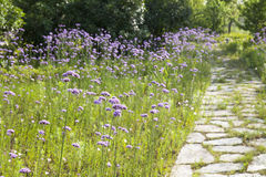 Stone walkway with flowers Stock Image