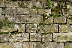 Stone wall. Traditional stone wall in Istria Croatia royalty free stock photography
