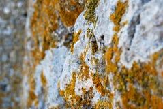Stone wall Stock Photography