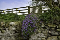 Free Stone Wall And Steps Leading To Wooden Farm Gate And Fence With Flowers And Blue Sky Stock Photo - 183791730