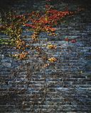 Stone wall with autumn leaves