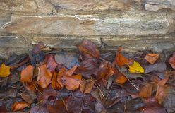 A stone wall with autumn leaves Stock Image