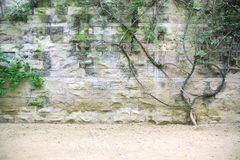 Stone wall background with a bush and green leaves. Empty copy space Royalty Free Stock Photos