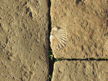 Stone wall background. Detail of a stone wall with a fossile shell useful as a background Royalty Free Stock Image