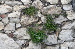 Stone wall background with grass stock photo