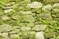 Stone wall background. Stone and plants wall background Stock Photography