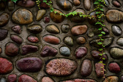 Stone wall. Colorful stone wall with vine royalty free stock image
