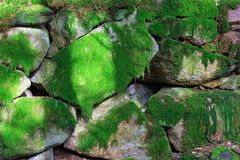 Stone wall coverd with moss Royalty Free Stock Images