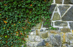 Stone wall covered by leafs Stock Photos