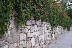 Stone wall covered with leaves Royalty Free Stock Images
