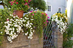 Stone wall decorated with l flowers Stock Images
