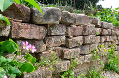 Stone Wall. A dry stone wall being invaded by plants and grasses Stock Images