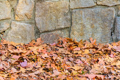 Stone wall and dry leaves Stock Photos