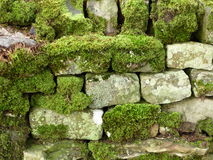Stone Wall encrusted with moss. A dry stone wall encrusted with bright green mosses Stock Images