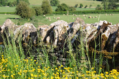 Stone wall in English countryside of Cotswolds. Stone wall with flowers in English countryside of Cotswolds Stock Photo