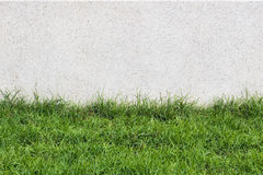 Stone wall and flora with grass in Garden Decoration Royalty Free Stock Photography