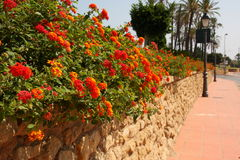 Stone wall, flower in the street Stock Photography